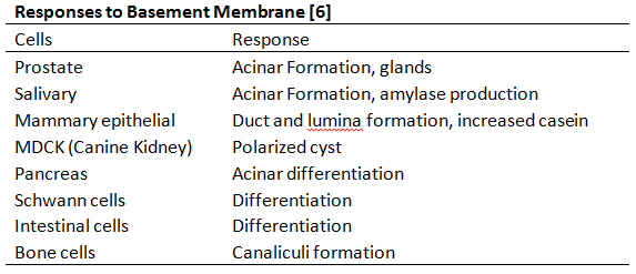 File:Cell differentiation.PNG