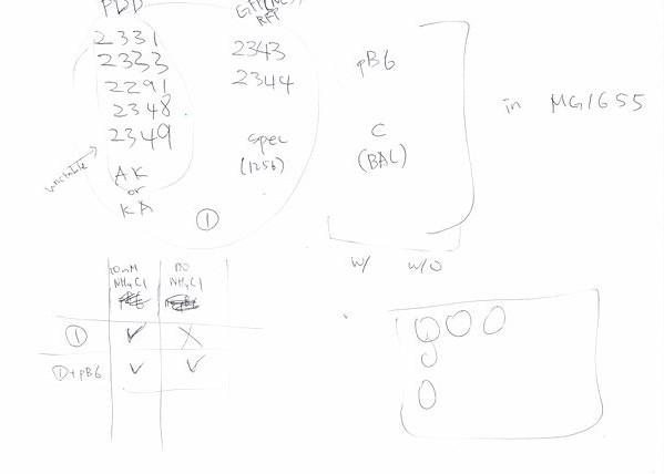 File:Jin Notes2.JPG