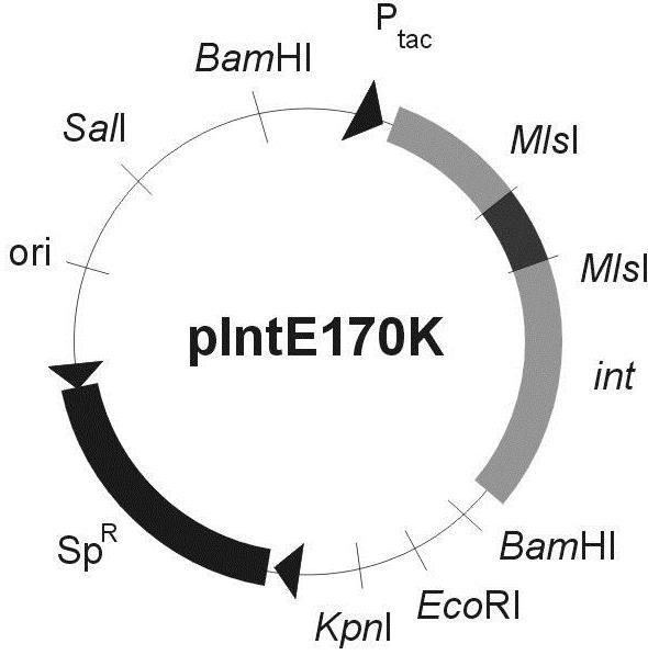 File:PIntE170K.jpg