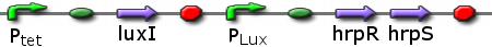 File:ICGEMS sys Ptet luxI Plux hrpR-hrpS.png