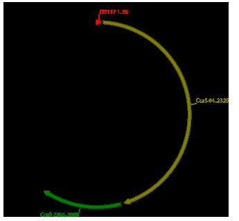 Constitutive Promoter (BBa_j23117) + scar + [RBS-CcaS-RBS-CcaR], plasmid pSB1C3