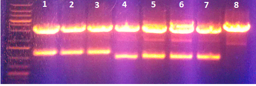 Image:PcTF in-vitro Expression.png