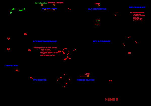 Protoporphyrins.png