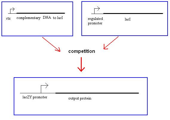 File:Threshold protein.jpg
