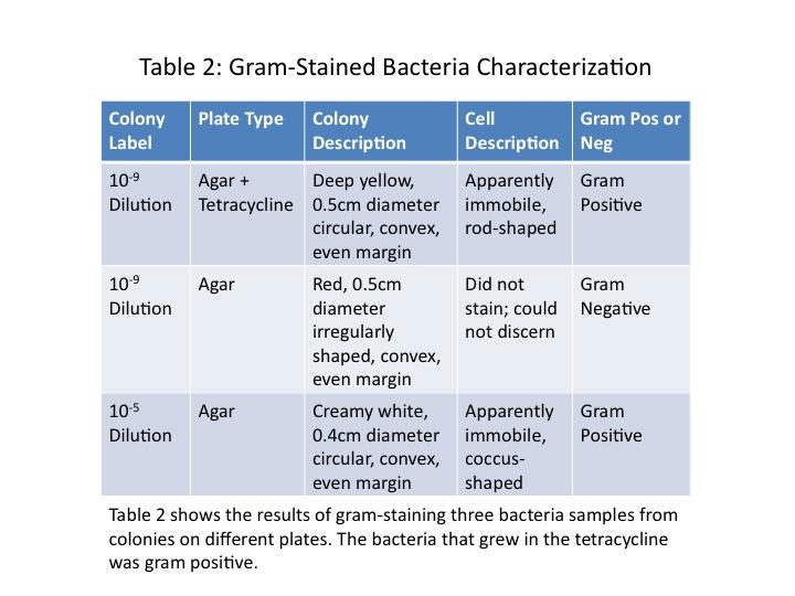 File:Dagum Table 2 Bacteria Characterization.jpg