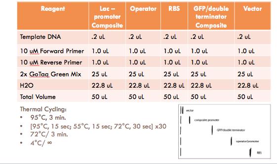 File:PCR3.png