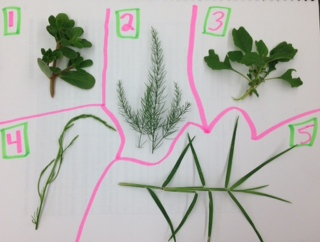 Plant samples.JPG