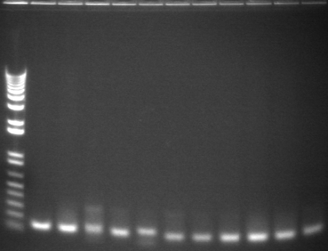 8-6 pcr eighteth 11fromback.jpg