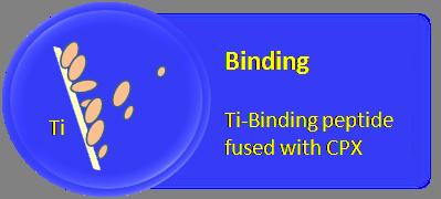 File:Binding.png