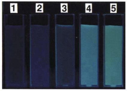 File:Comparison of GFP flurorescence.jpg