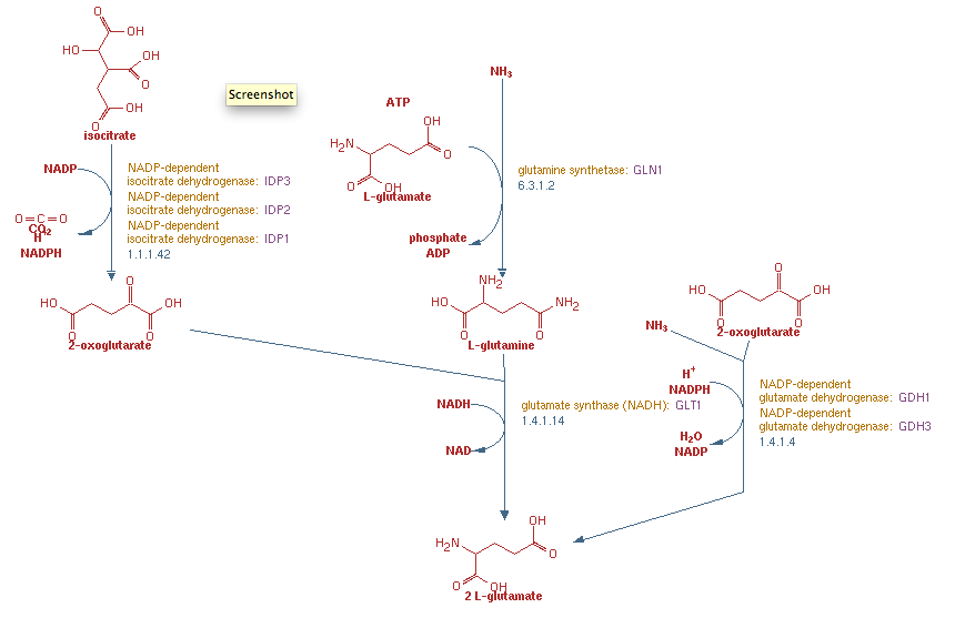 Glutamate Biosynthesis Pathway