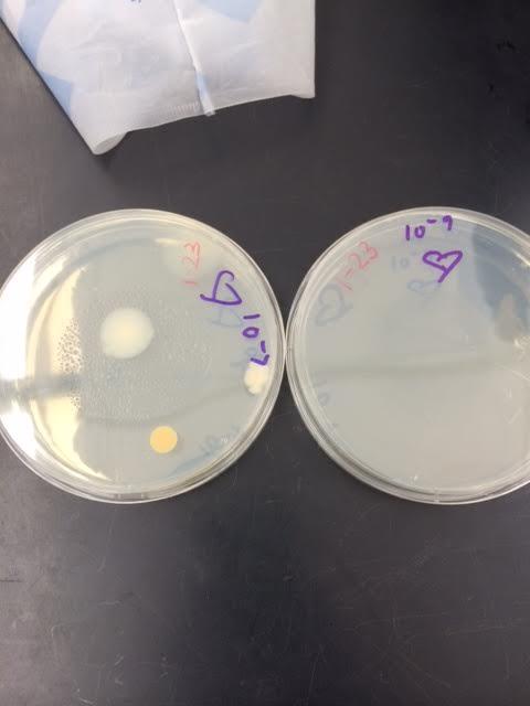 Bacteria 5.png
