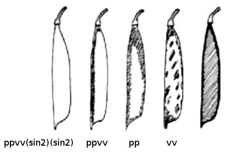 Pea pod fiber.png