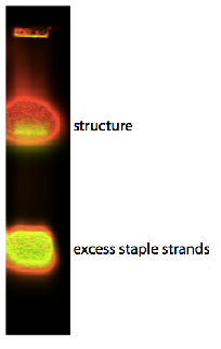 Fig. 54. 1% agarose with the fluorescent labelled cholesterol-modified DNA origami plate. The upper overlayered band represents the structure of the baseplate with the two CyDyes and cholesterol. The lower yellow band is excess staples strands.