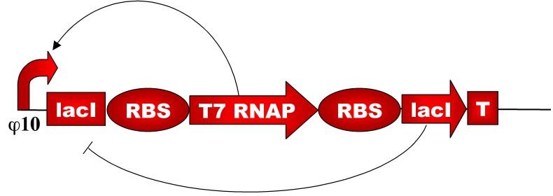File:VM20RegulationReducedModel.jpg