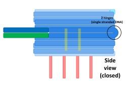 File:BM12 nanosaurs 1 Scaffold side s.jpg