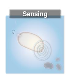File:Sensing.png