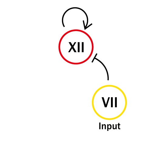The Concept of the Experiment of XII