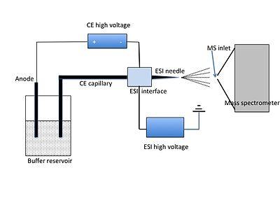Fig. 3 CE-MS apparatus