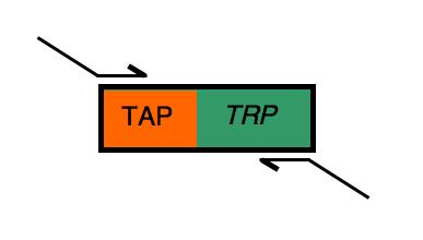 File:TAP-TRPprimers.png