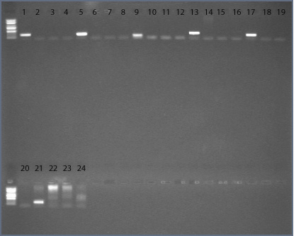 File:15dec09 sample 7 8 9 redos text.jpg