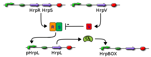 Image:ICGEMS sys Hrp.png