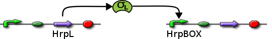 File:ICGEMS dvc HrpL+HrpBOX.png
