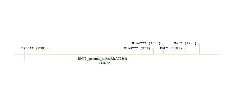 File:Macintosh HD-Users-nkuldell-Desktop-RNT1 genomic noEcoRI(A723G).PNG.PNG