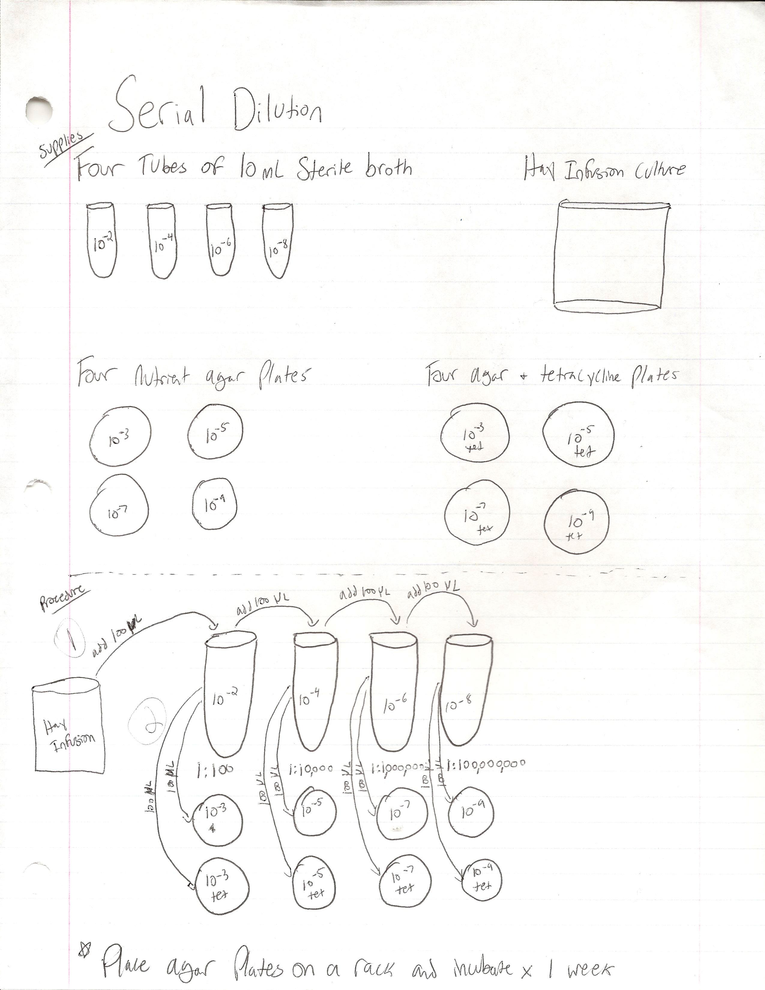 Serial dilution diagram.jpg