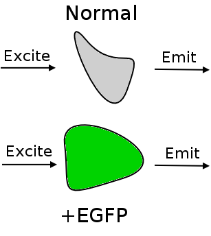 File:YeemMod1Fig2a.png