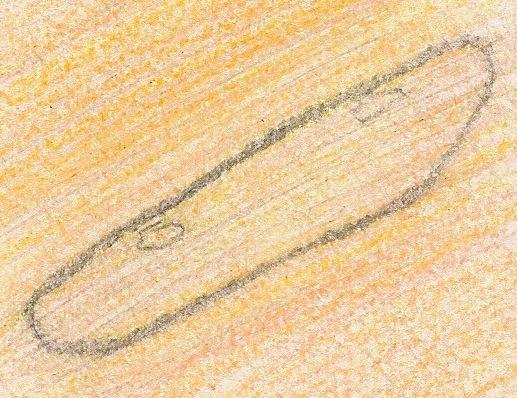 File:Nbonan 06 07 2014 paramecium.jpeg