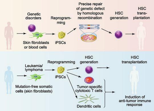 File:Stem cell image.jpg