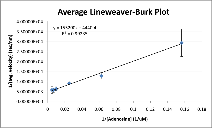 Average Lineweaver-Burk Plot.png