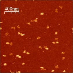 Image:BM12 nanosaurs AFM Closed overview s.jpg