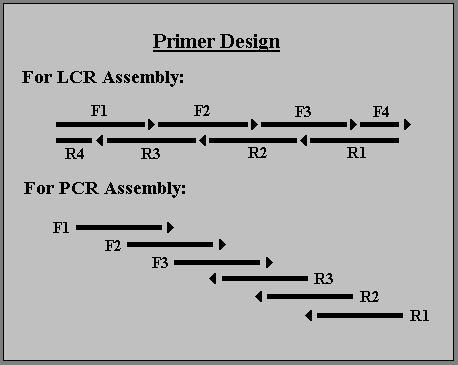 Primer Design.JPG
