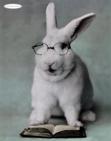 File:Smart bunny.jpg