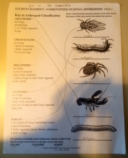 Arthropods .jpg