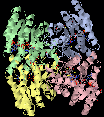 3BMM structure in jmol.png