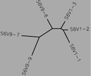 File:Tree S6 DNA.png