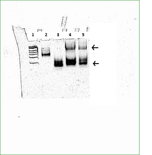 File:2011-06-18 PAGE 4 DICER selvsamling.PNG