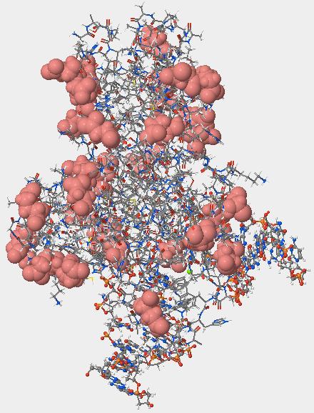 The acidic amino acids in hOGG1.