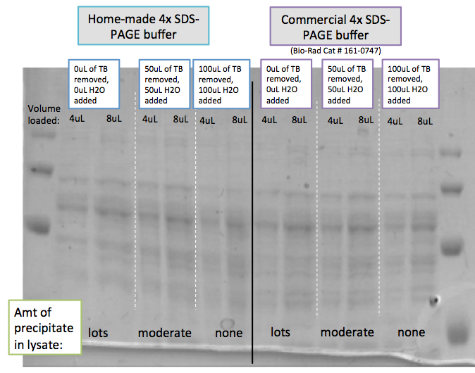 Image:2014 03 07 precipitate in SDS-PAGE TB culture samples doesnt matter for gels.png