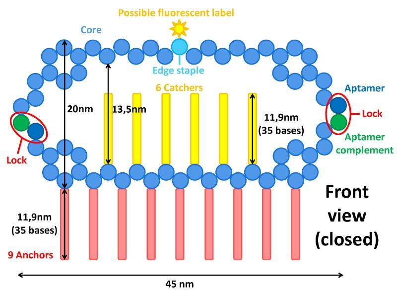 File:BM12 nanosaurs Overview Front view.jpg