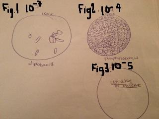 File:Morphology.JPG