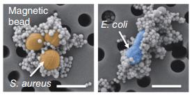 File:Nanomagnets.png