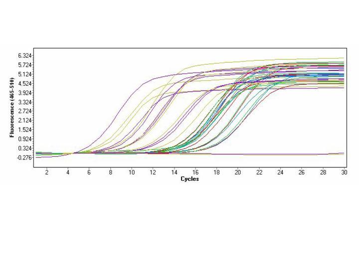 File:BioMicro Norm amp curve.jpg
