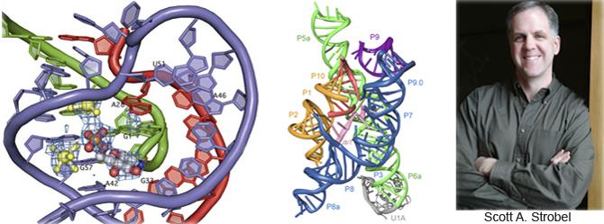 File:Strobel Lab cover image.PNG