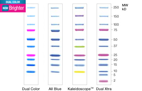 File:Precision Plus Protein™ Dual Color Standards -161-0374.jpg