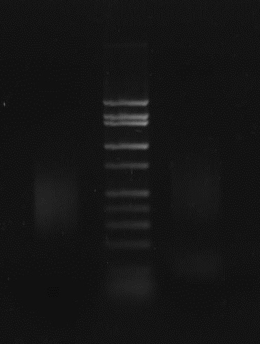 File:Reprep-greenbuls2-pcr.JPG