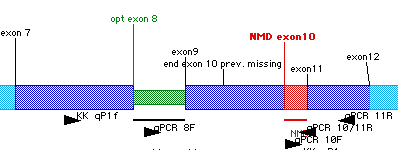File:GCK linear sequence schematic.png